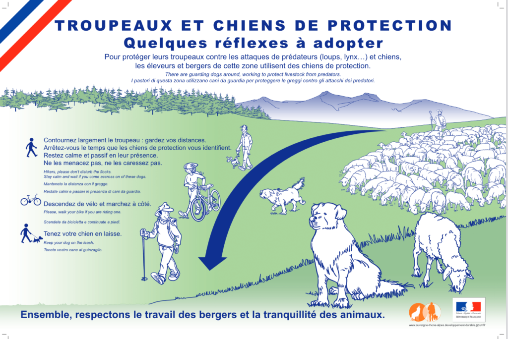 Chiens de protection des troupeaux